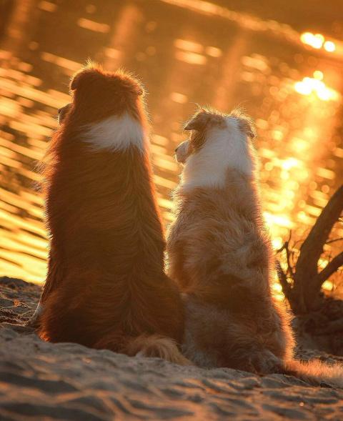 Романтическое свидание.