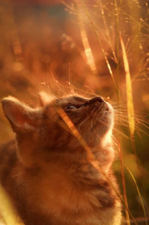 кот рыжий (личноефото)