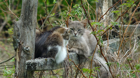 Деревенская любовь