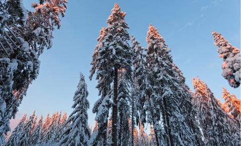 Инстаграм недели: новый горнолыжный сезон в Шерегеше