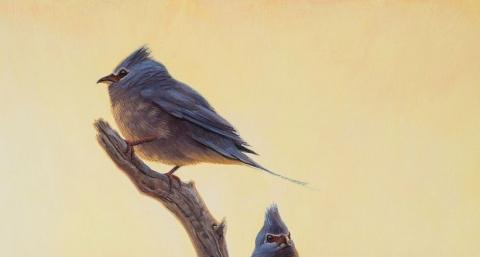 Птицы эволюционировали сразу…