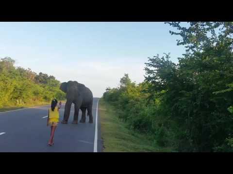 Девочка убрала слона с дороги