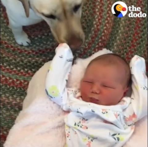 Собаки встречают дома новоро…