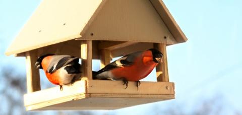Как сделать домики для птиц:…