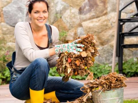 Удобрения для осени, которыми нужно запастись уже сейчас. Пять причин измельчения ягод малины