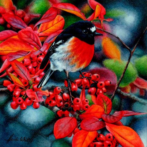 Яркий мир птиц. Художник-натуралист Хайди Уиллис