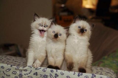 Эти очаровательные котики по…