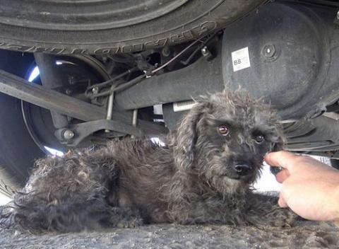 Бездомная собака боится спас…