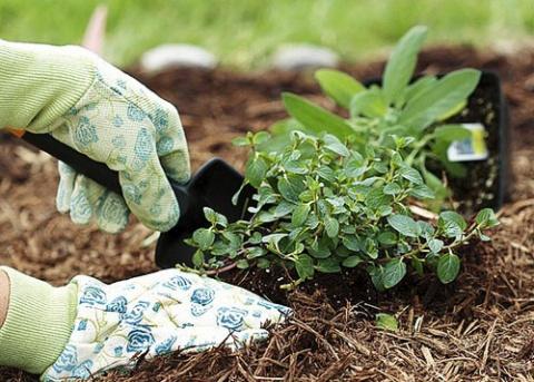 Как пересадить растение с гр…