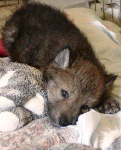 «Пожалуйста, заберите этих щенков, иначе они умрут» И она кинулась в ночь - спасать...