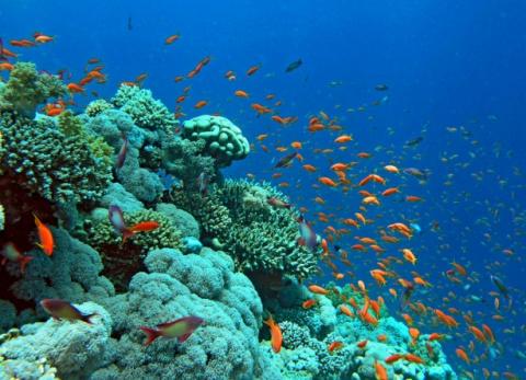 Опасные обитатели Красного моря