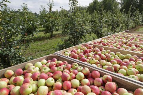 """В Тульской области заложены новые сады интенсивного типа сельхозпредприятия """"Плава"""""""