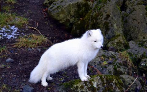 Куда стоит отправиться, чтобы полюбоваться на белых медведей, косаток и прочих животных, предпочитающих прохладный климат.
