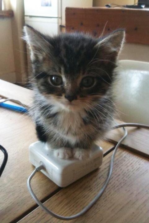25 фотографий котов, которые…