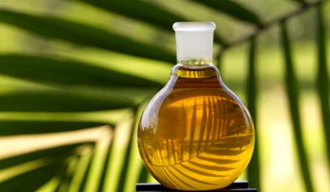 Пальмовая отрава
