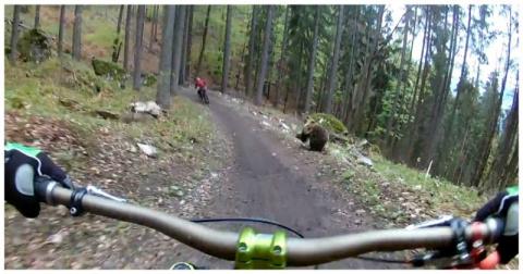 Ничто так не заряжает во время катания на велосипеде, как голодный медведь бегущий за тобой!