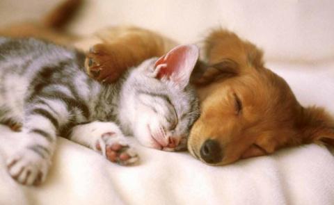 Самые дружелюбные породы кошек