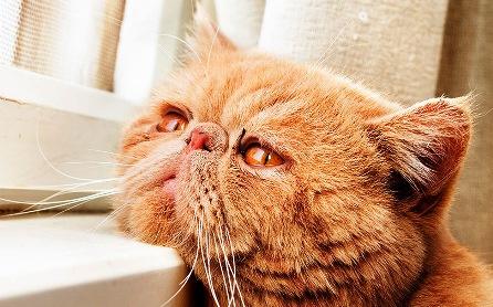 Думаете, кошки не умеют скучать по людям? Это видео за 3 минуты докажет вам обратное