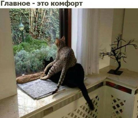 Зашел мужик в антикварную лавку))