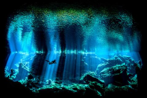 Красота подводного мира: раб…