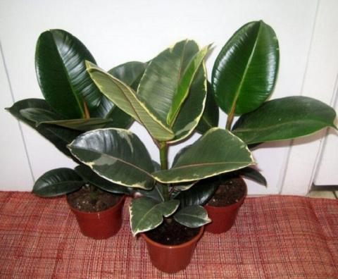 Эти растения – кислородные б…