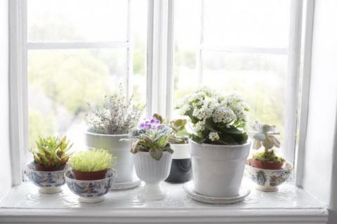 Как разместить побольше комнатных растений на подоконнике?