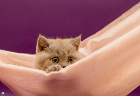 Наши верные спутники — кошки…