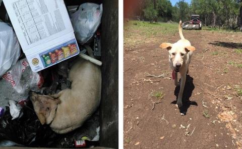 История лабрадора, брошенного умирать в мусорном контейнере