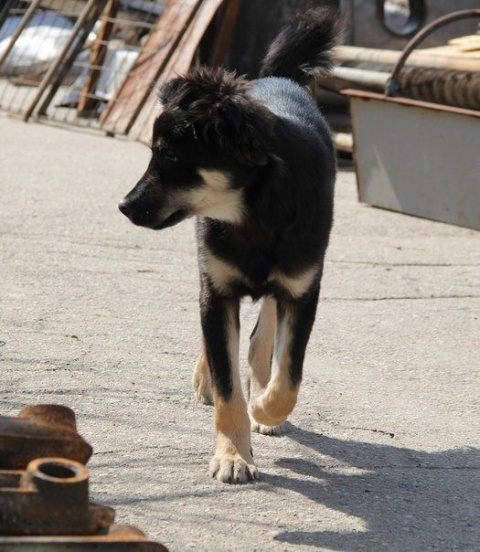 Чудесная история выздоровления щенка