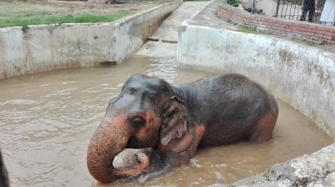 Слон, который провел 30 лет в зоопарке, наконец-то оказался на свободе