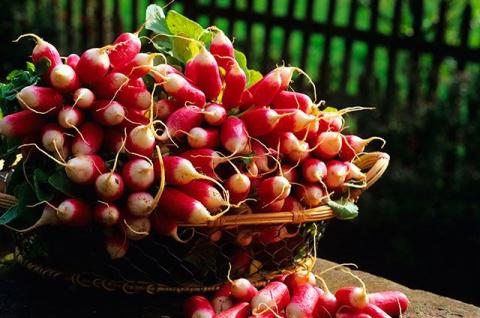 Весенний редис. Как вырастить сочные и яркие плоды