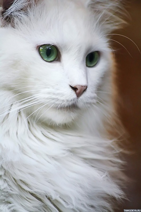 bianka012 Белая