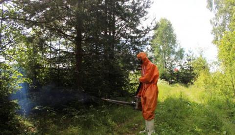 В Германии по неизвестным причинам пропали почти все насекомые