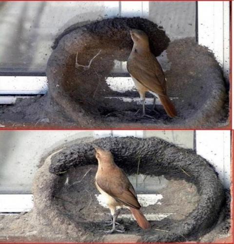 Эти птички явно читают разде…