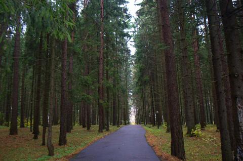 Отель затерянный в лесу.