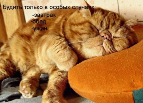 Пост хорошего настроения)