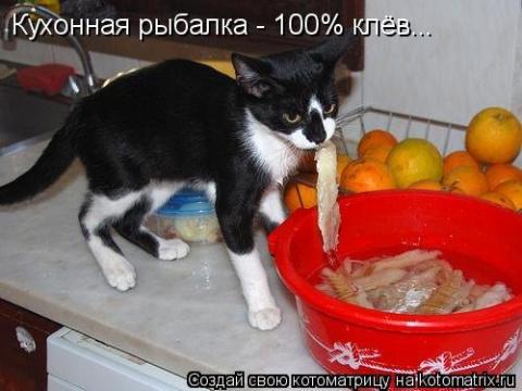 Голодные котоматрицы