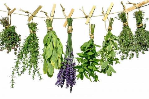 Не спеши покупать антибиотики — попробуй эти травы! Мощнейшие лекарства от матушки-природы