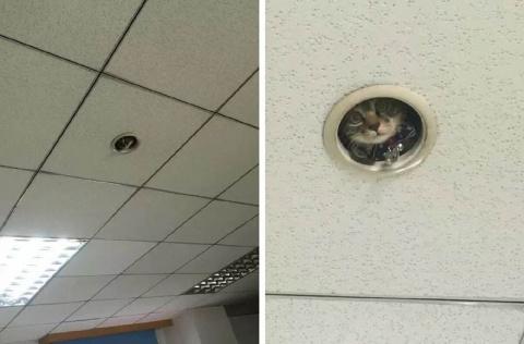 И тут работники офиса поняли…