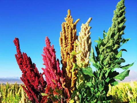 Съедобные полезные растения,…