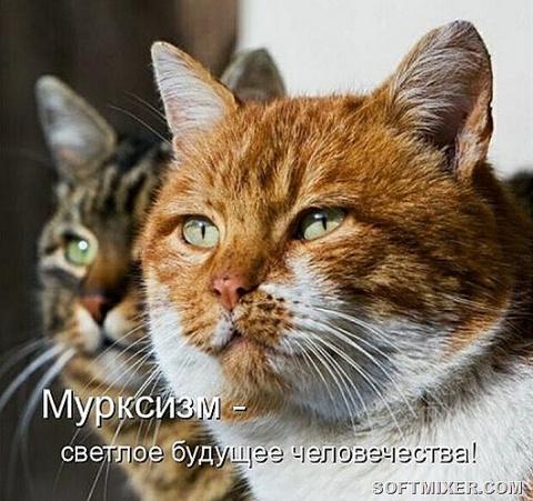 Котодром))