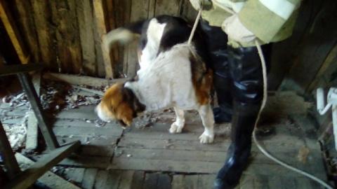 В Димитровграде спасли пса, который провалился в погреб и не мог выбраться два дня