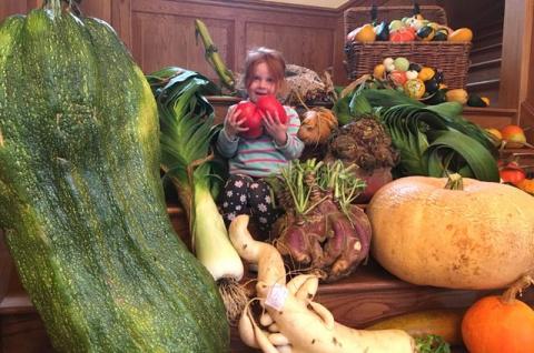 Огородные великаны. Какие сорта овощей порадуют размерами плодов
