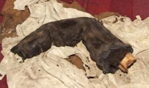 В Египте обнаружили мумифицированный палец великана