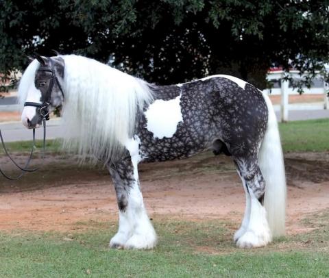 12 лошадей невероятной красоты!