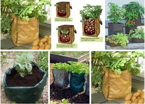 Выращиваем картофель в... мешке!