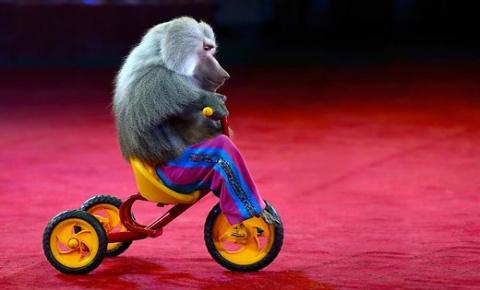Сейм Латвии запретил использовать диких животных в цирке