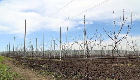 В Дагестане заложено более 420 га интенсивных садов