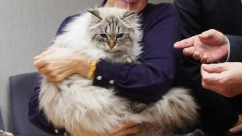 Кот, подаренный Путиным япон…