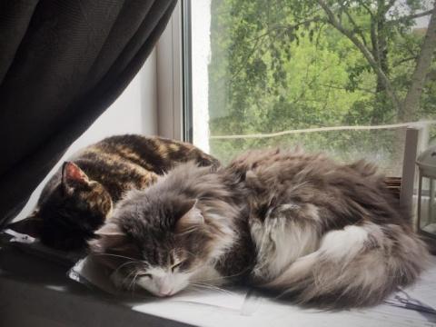 По поведению котов я поняла, что в доме беда. Они звали на помощь из последних сил...